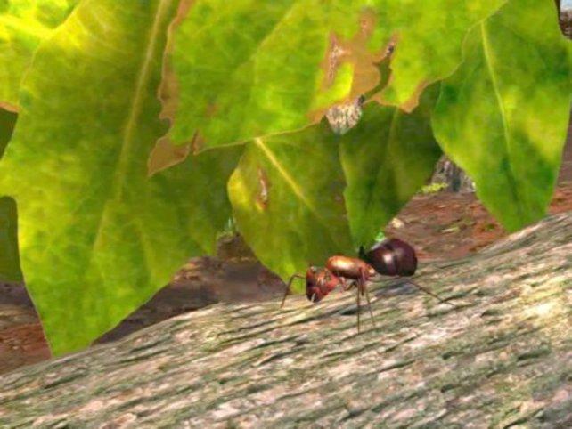 Ein Bild aus einer Videosequenz.