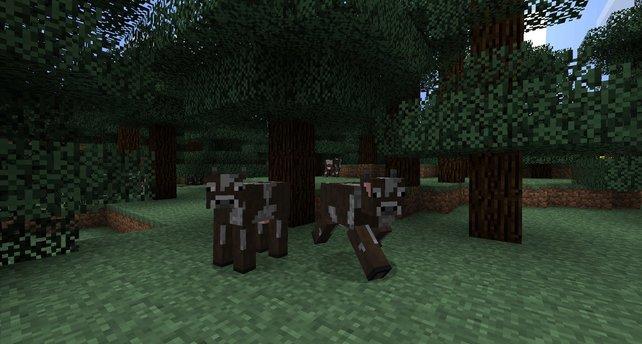 Selbst die Kühe bestehen aus Quadern!
