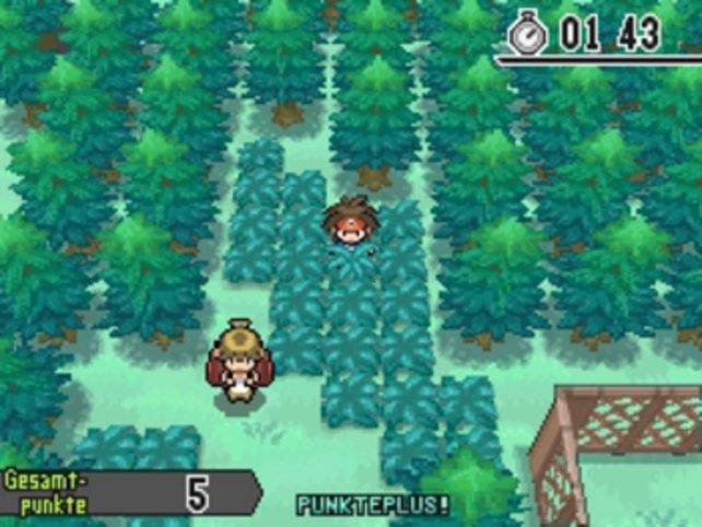 Raschelt da ein Pokémon im Gras?