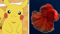 Ausgerechnet ein Fisch findet nach 17 Jahren noch Spielfehler