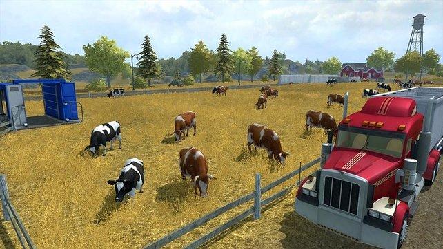 So sehen glückliche Kühe aus.