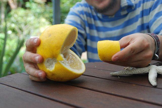 Quereinsteiger: Diese Grapefruit hat es geschafft und lebt fortan als Pac-Man.