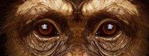 Beat the Chimp: Bist du schlauer als ein Affe?