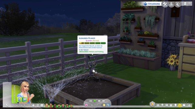 Hier seht ihr das Informationsfenster der Pflanze.