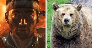 Spieler werden von Killer-Bären angegriffen