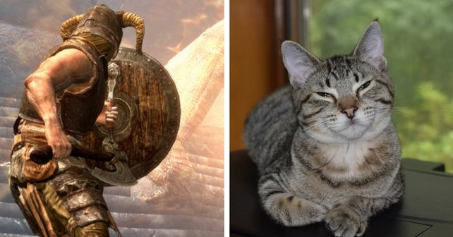 Skyrim und Katzen: Eine perfekte Kombination