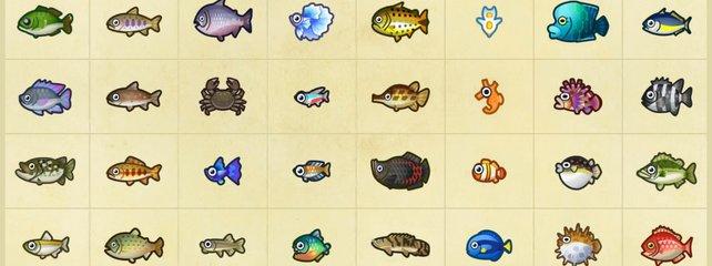 Animal Crossing New Horizons Alle Fische