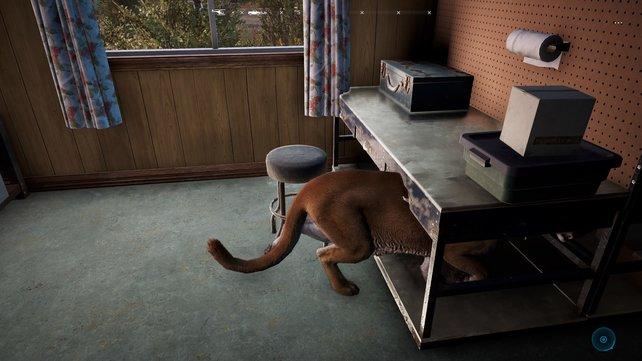 Manche Bugs in Far Cry 5 sind ja noch ganz unterhaltsam. Wenn das Spiel aber gar nicht erst startet oder ständig abstürzt, vergeht der Spaß...