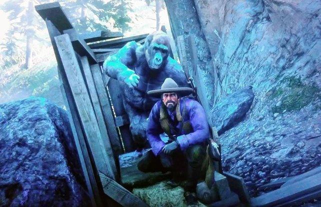 Wer einen Gorilla in freier Wildbahn antrifft, sollte auch ein Foto machen.