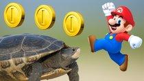Auf dem Rücken der Schildkröten zur Spielekonsole