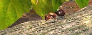 Test PC Imperium der Ameisen