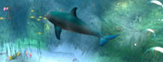 Tests: Ecco The Dolphin