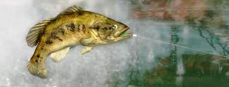 Test PS3 Pro Bass Fishing: Ohne Netz, dafür mit Angel oder Controller
