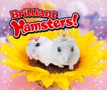 Brilliant Hamsters