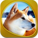 Dogs 360 Gold